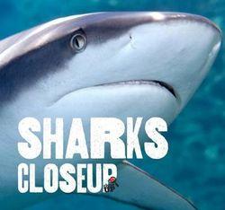 Sharks CloseUp