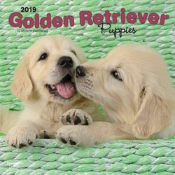 Golden Retriever Puppies 2019 Square Wall Calendar