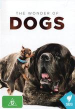 Wonder Of Dogs