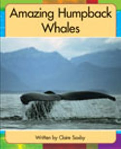 Lvl 19h: Amazing Humpback Whales