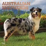 Australian Shepherds 2019 Square Wall Calendar