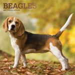Beagles 2019 Square Wall Calendar