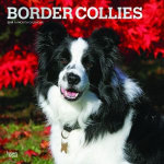 Border Collies 2019 Square Wall Calendar