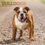 Bulldogs 2019 Square Wall Calendar