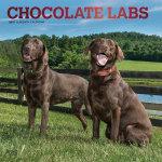 Chocolate Labrador Retrievers 2019 Square Wall Calendar