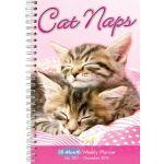 Cat Naps 2018 Calendar