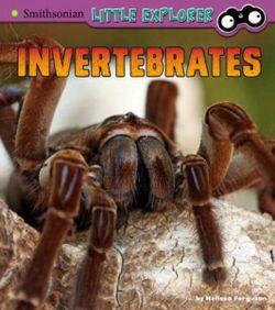 Invertebrates: a 4D Book (Little Zoologist)