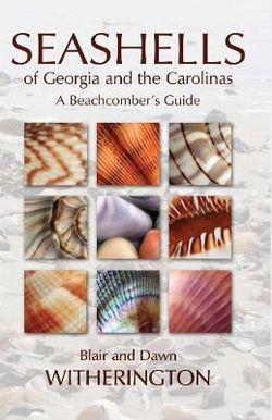 Seashells of Georgia and the Carolinas