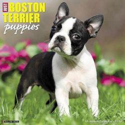 Just Boston Terrier Puppies 2018 Wall Calendar (Dog Breed Calendar)