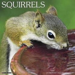 Squirrels 2018 Wall Calendar