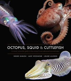 Octopus, Squid and Cuttlefish