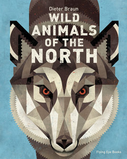 North - Animals of the Wild