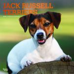 Jack Russell Terriers 2019 Square Wall Calendar
