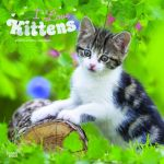 I Love Kittens 2019 Square Wall Calendar