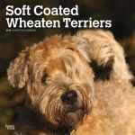 Soft Coated Wheaten Terriers 2019 Square Wall Calendar