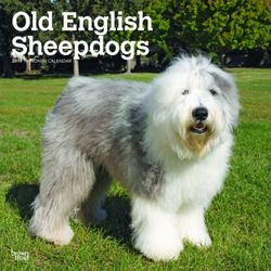 Old English Sheepdogs 2019 Square Wall Calendar
