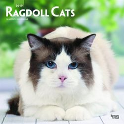 Ragdoll Cats 2019 Square Wall Calendar