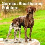 German Shorthaired Pointers 2019 Square Wall Calendar