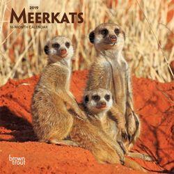 Meerkats 2019 Mini Wall Calendar